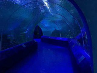180 or 90 Degree Acrylic Panels for Aquarium Tunnel