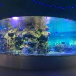 factory supply fish bowls, round glass tank aquariums
