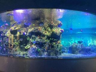 factory supply fish bowls, round glass tank aquariums