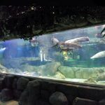 Customized luxury design underwater Thick Acrylic Panels Aquarium window Glass Sheet