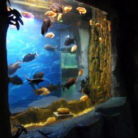 2018 Top Quality Acrylic Panel for aquarium window