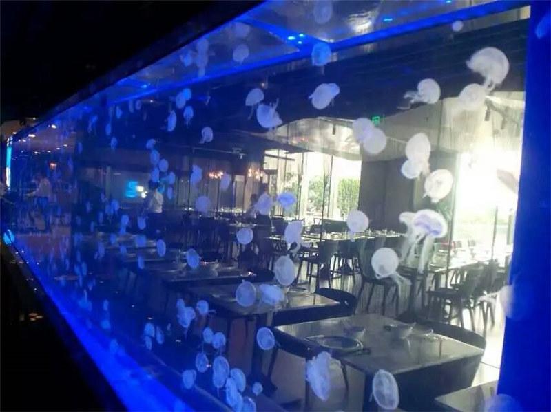 Acrylic sheet Jellyfish tank