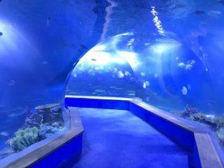 Clear pmma acrylic Large plastics tunnel of aquarium
