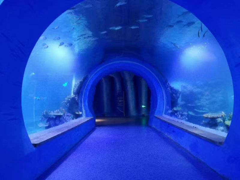High clear large acrylic tunnel aquarium of different shapes