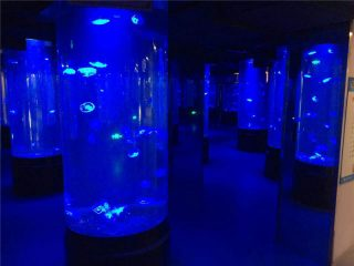 acrylic jellyfish aquarium tank glass